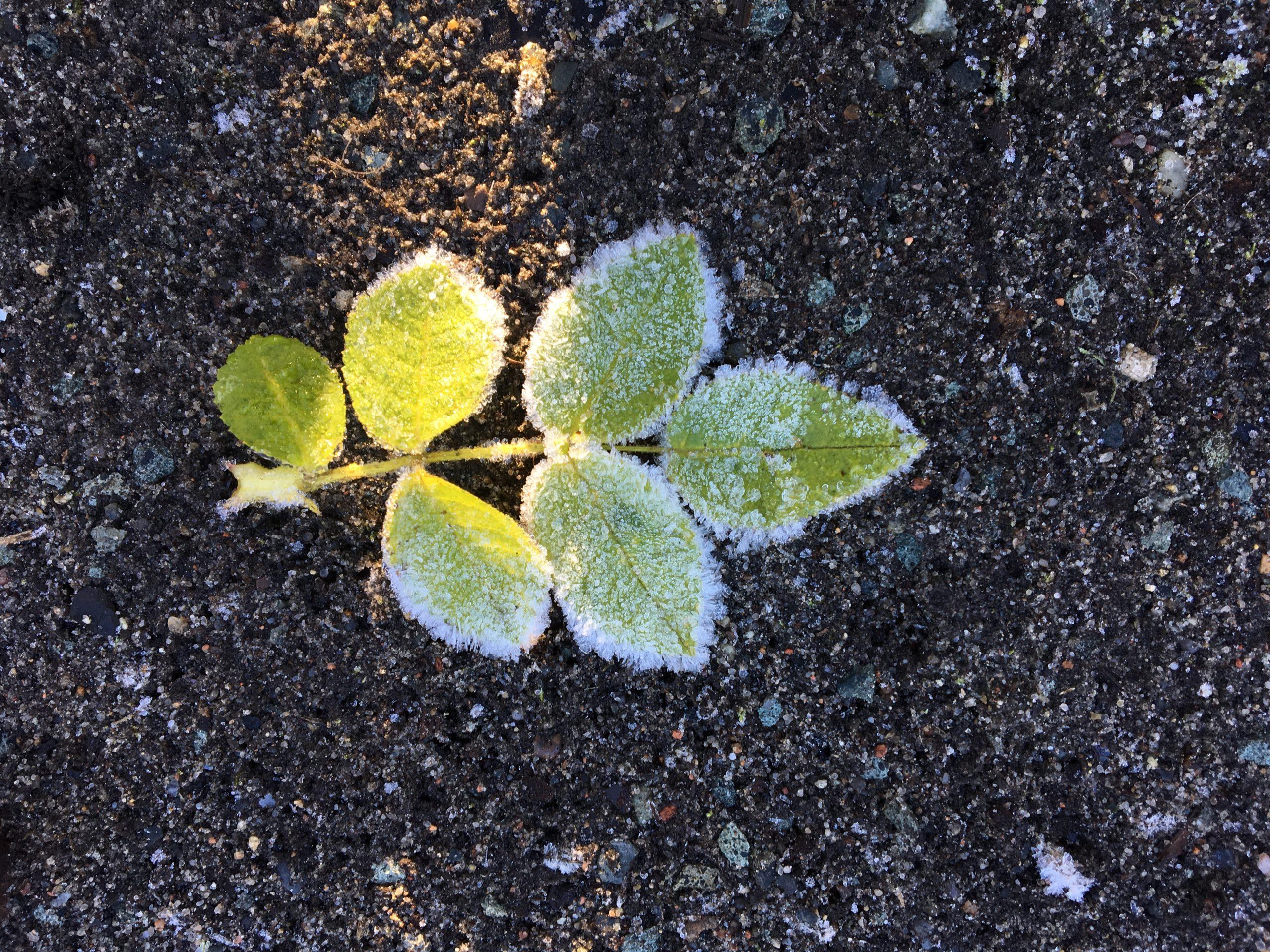 inner gardening herbst hannah lisa linsmaier